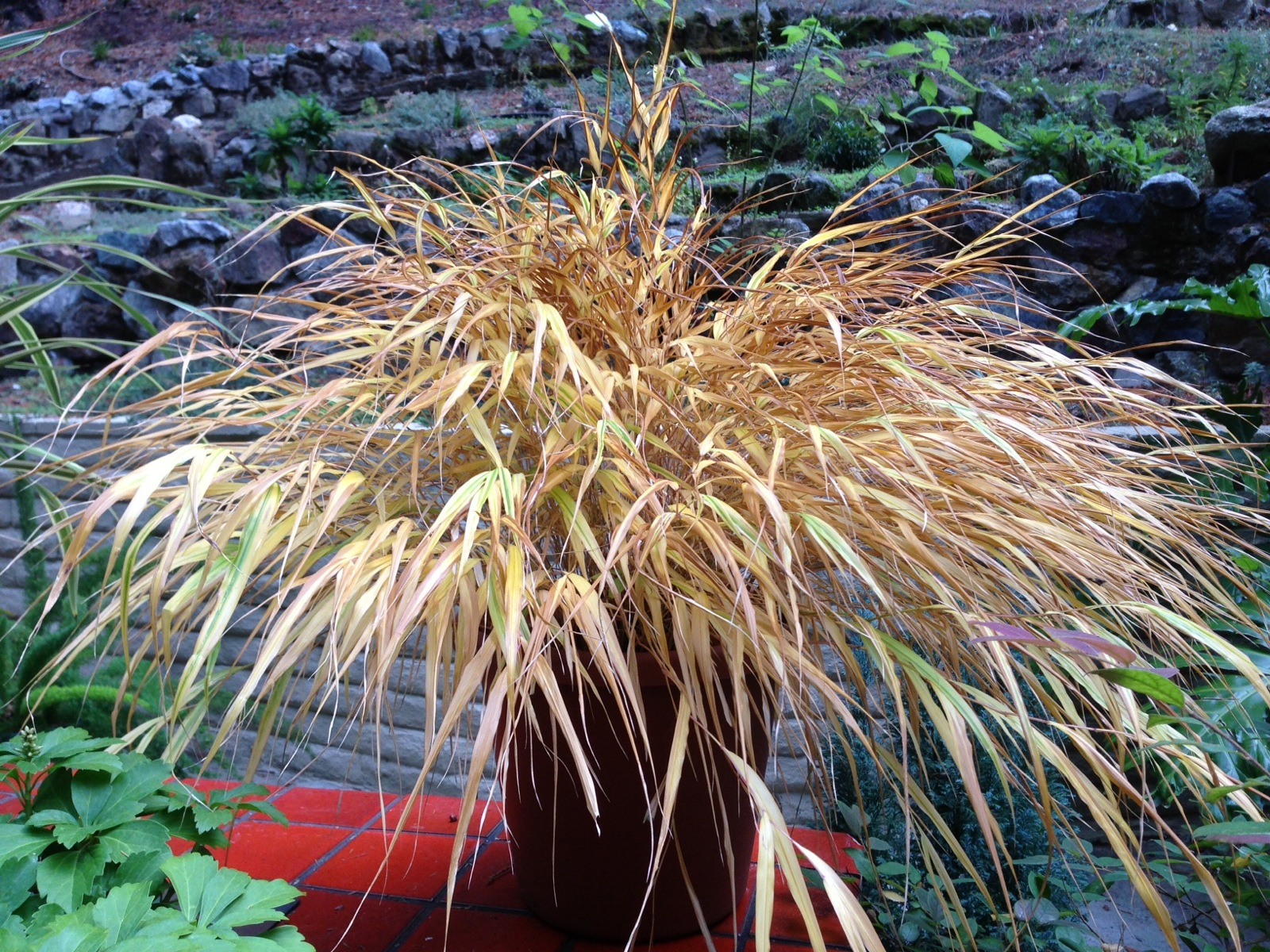 ornamental perennials essay • prune the foliage of perennials when they die back for the winter and ornamental grasses before new growth begins in.